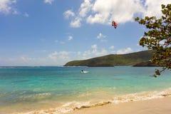 Cerf-volant surfant dans les Caraïbe photographie stock