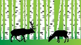 Cerfs communs à l'arrière-plan de vecteur de forêt de bouleau illustration stock