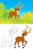 Cerfs communs illustration stock