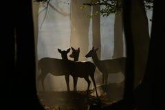 Cerfs communs affrichés dans le crépuscule Photos stock
