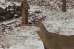 Cerfs communs au câble d'alimentation d'oiseau Photo stock