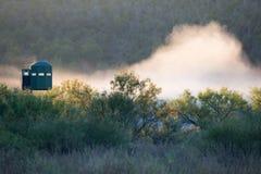 Cerfs communs chassant des abat-jour un matin brumeux Photographie stock libre de droits