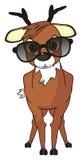 Cerfs communs dans des lunettes de soleil Photo stock