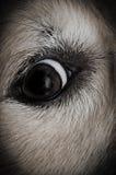 Cerfs communs dans des phares photo libre de droits