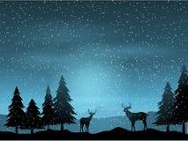 Cerfs communs dans le paysage d'hiver Photographie stock libre de droits
