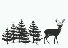 Cerfs communs dans les bois Images libres de droits