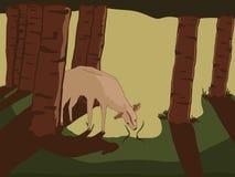 Cerfs communs dans les bois Photo stock