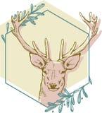 Cerfs communs de Brown sur l'hexagone vert entourés Image stock