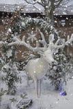 Cerfs communs de Noël blanc dans la neige décoration photo stock