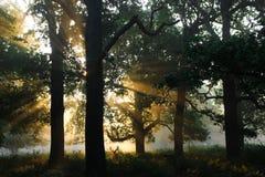 Cerfs communs de Richmond Photo stock