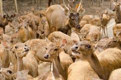 Cerfs communs en parc Image stock
