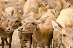 Cerfs communs en parc Photographie stock