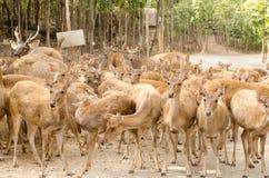 Cerfs communs en parc Photographie stock libre de droits
