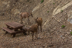 Cerfs communs en parc Photographie stock
