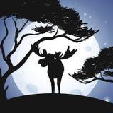 Cerfs communs et Forest Scene de silhouette Illustration Stock