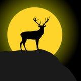 Cerfs communs et lune Images stock