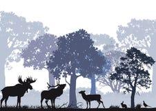 Cerfs communs et orignaux dans une forêt Photo stock