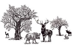 Cerfs communs et sanglier Image stock