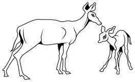 Cerfs communs et veau Image stock