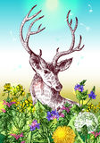 Cerfs communs et wildflowers illustration stock