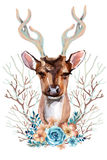 Cerfs communs - Front View Images stock