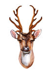 Cerfs communs - Front View Photographie stock libre de droits