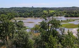 Cerfs communs inondés Ridge Golf Club Photos stock