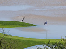 Cerfs communs inondés Ridge Golf Club Hole Photos libres de droits