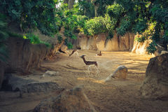 Cerfs communs le Sun Photos stock