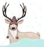 Cerfs communs mignons avec le fond d'hiver de chapeau Image stock