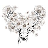 Cerfs communs réalistes tirés par la main entourés par des fleurs Belle illustration fortement détaillée de vecteur d'isolement l Photo libre de droits