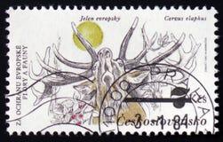 Cerfs communs rouges ou elaphus de Cervus, de la série Flora et de faune, vers 1983 Image libre de droits