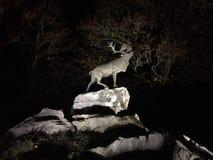 Cerfs communs sur des falaises la nuit Photo libre de droits