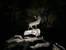 Cerfs communs sur des falaises la nuit Images stock
