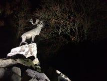Cerfs communs sur des falaises la nuit Image stock