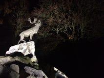 Cerfs communs sur des falaises la nuit Photographie stock libre de droits