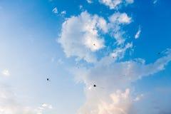 Cerfs-volants dans le ciel Photos libres de droits