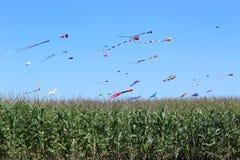 Cerfs-volants dans un champ de maïs sur samedi après-midi images stock