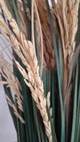 cerial的米吃亚洲泰国 库存照片