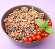 Cerials with chocolate and currants Stock Images