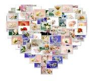 Cerimonia nuziale del collage illustrazione di stock
