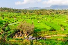 Cerimonia tradizionale sul giacimento del riso vicino a Tirtagangga in Bali, Ind Immagini Stock