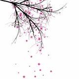 Cerise de fleur Images stock