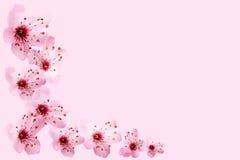 cerise de fleur Photos stock