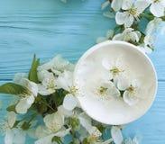 Cerise de floraison cosmétique crème sur un fond en bois bleu Photos libres de droits