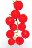 Cerise de tomate de branchement Photo libre de droits