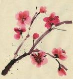Cerise fleurissante. Source. Encre et balai. Images stock