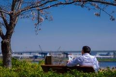 Cerise japonaise Photos libres de droits