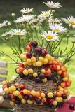 Cerise multicolore peu profonde sur une bouteille couverte de brindilles tissées de saule et de bouquet des margaritas photo stock