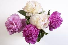 Cerise Pink och den vita pionen blommar på den trävita tabellen Royaltyfri Bild